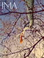 IMA Vol.15: Ryan McGinley