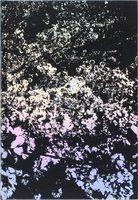森山大道:安吾(日本語版) (9784908647086)