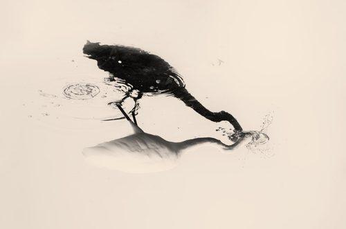 《Des Oiseaux - Albarrán Cabrera》© Albarrán Cabrera