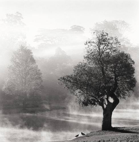 《Des Oiseaux - Michael Kenna》© Michael Kenna